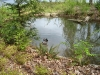 resident-ducks-on-east-pond
