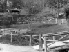 Old_Madrona_trails